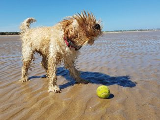 Summer_dog_on_beach