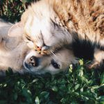 Why Should I Use Pet Supplies For My Marketing?